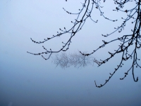 Branches In The Fog