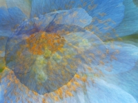 Blue Poppy Multiple