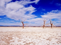 3 Trees In Dry Lake Bed