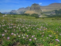 Logan Pass In Late Summer