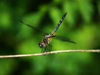 Img_0025 Dragonfly