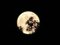 Full Moon Though Trees