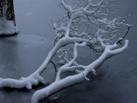 Fallen Branch Outlined By Snow