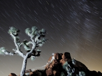 Joshua Tree's Night View