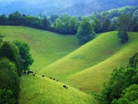 The Rolling Hills Of Tennessee