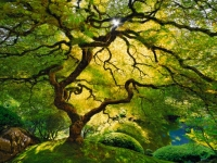 Honorable Mention, Peter Lik