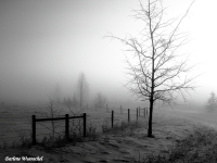 Foggy Winter Morning
