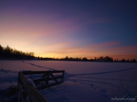 Winter At Elk Island