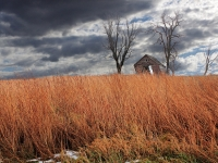 Corn Crib And Prairie Grass