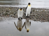 Mirror, Mirror On The Wall....