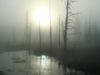 Eerie Fall Sunrise In Yellowstone National Park