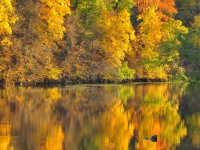 Fall Colors At Lake La Cygne
