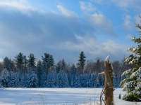 After A Snow Fall In The Gatineau Park