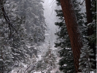 Snow And Mist On California Mountain