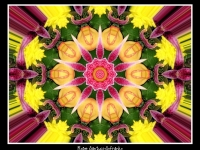 Lilies And Mums Kaleidoscope