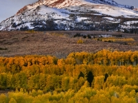 Snow Covered Peak With Fall Aspens