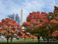 Fall Washington Monument
