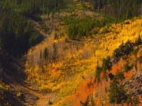 Autumn Mountainside Near Berthoud Falls