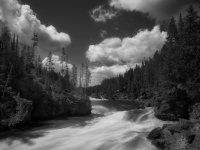 River Gods Of Yellowstone