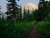 Sunrise On The Naches Loop Trail