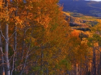 Fall Color Bounty Of Rio Blanco County