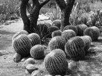 All The Cacti