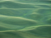 Waves Of Green