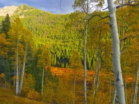 Autumn Aspens In The Shadow Of The Eagles Nest