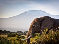 The Mountain And The Elephant