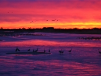 Sandhill Cranes At Sunset #2