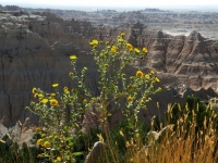 Badlands Natl Park