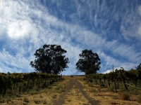 The Road To Pinot Noir