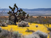 Antelope Valley In Spring