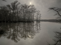 Reelfoot Reflection