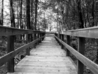 Wooded Wooden Walkway