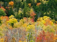 Fall Color, Crawford Notch