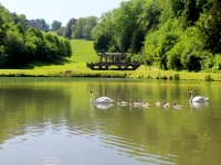 Lake, Wildlife And Palladian Bridge