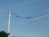 Birds Sitting On The Wire.