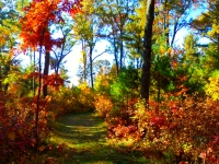 The Fall Color  Walk