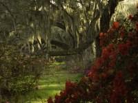 Blooms Among The Spanish Moss