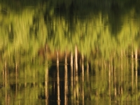 Hoiester Lake Abstract Reflection
