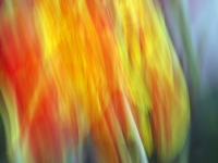 Day Lilly Abstract