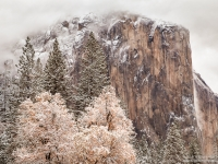 El Capitan In Snow