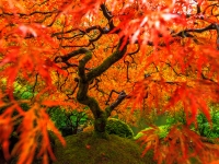Fall Foliage At Japanese Garden