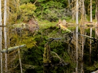 Beaver Pond Reflection