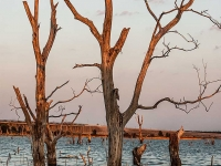 Bare Trees In Flood Zone