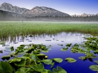 Alaska, Chugach National Forest,  Sunrise, Pond, Wild Water Lily