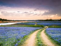 A Trail In The Middle Of Bluebonnet Field