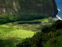 View Of Waipio Valley From Above