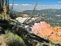 Cedar Breaks National Monument--canyon & Colors